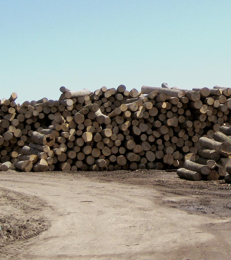 Porter Lumber Log Yard