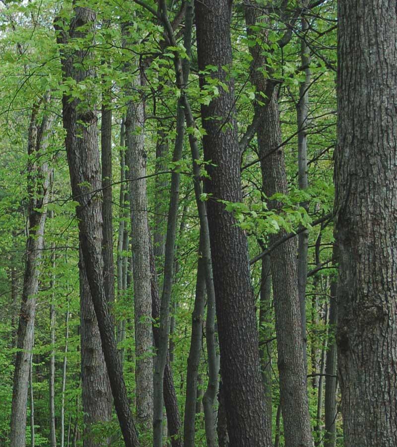 Timber Purchaser Amp Log Supplier Porter Lumber Ontario