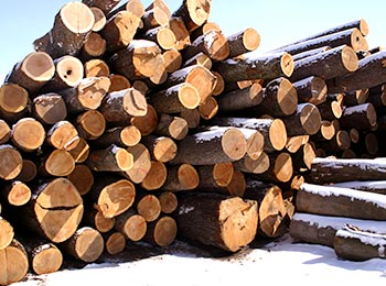 Cherry Saw Logs